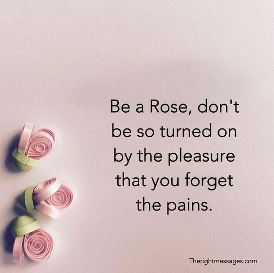 Be a Rose quote