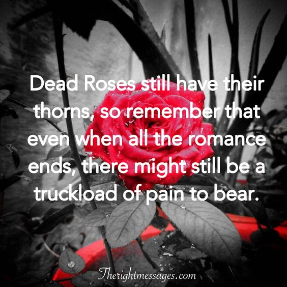 Dead Roses quote