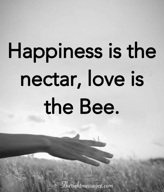 love is the Bee