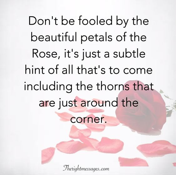 fooled by the beautiful petals of the Rose